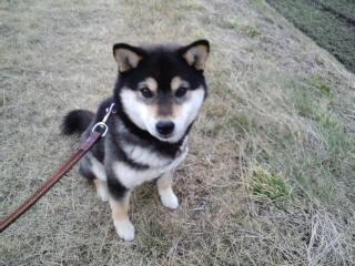 散歩大好きです。_d0027486_18424888.jpg