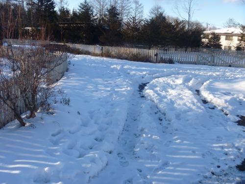 1月4日 道路・フィールド状況_b0174425_20211271.jpg