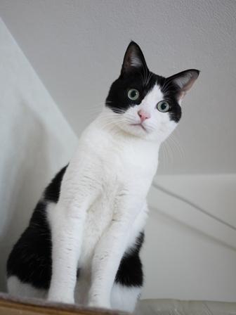猫のお友だち ビンゴくん編。_a0143140_232646.jpg
