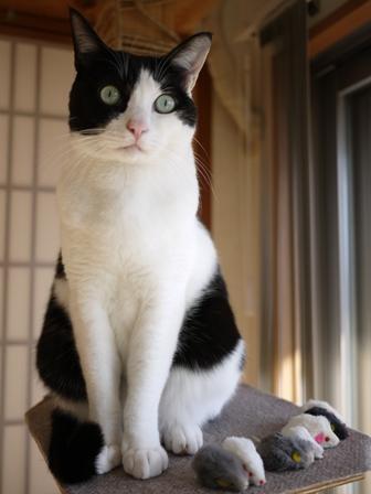 猫のお友だち ビンゴくん編。_a0143140_23264642.jpg