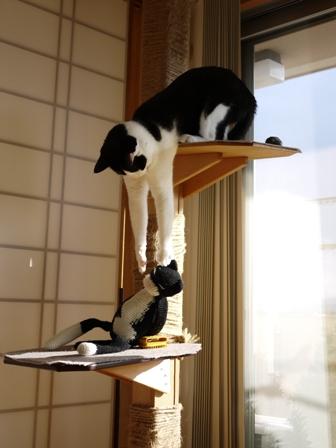 猫のお友だち ビンゴくん編。_a0143140_2327281.jpg
