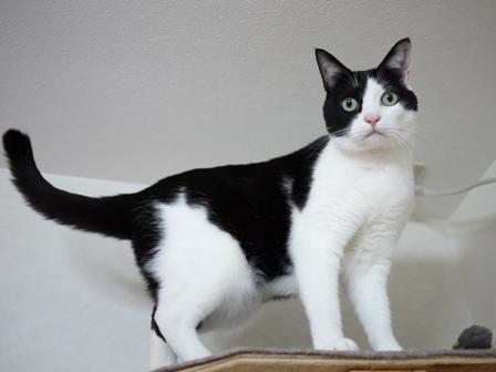 猫のお友だち ビンゴくん編。_a0143140_23274047.jpg