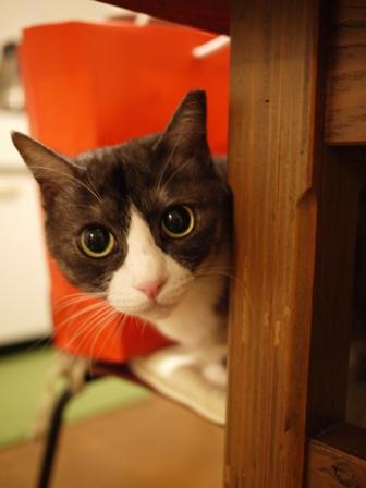 猫のお友だち マイちゃん編。_a0143140_23375698.jpg