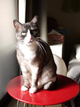 猫のお友だち マイちゃん編。_a0143140_23382036.jpg