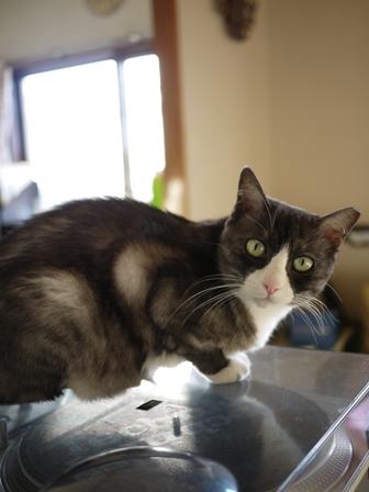 猫のお友だち マイちゃん編。_a0143140_2338507.jpg