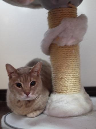 猫のお友だち シナモンちゃんプーちゃんとのくん編。_a0143140_23463652.jpg