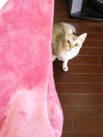 猫のお友だち シナモンちゃんプーちゃんとのくん編。_a0143140_2347566.jpg