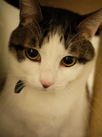 猫のお友だち シナモンちゃんプーちゃんとのくん編。_a0143140_2348458.jpg