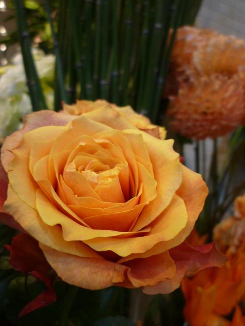 三菱一号館美術館 Chardin展 & ブティック ドゥ ジョエル・ロブション 丸の内..。.゚。*・。♡_a0053662_0445857.jpg