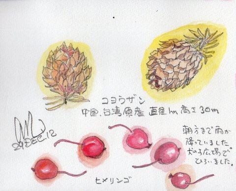 コヨウザンとヒメリンゴ_e0232277_10413044.jpg