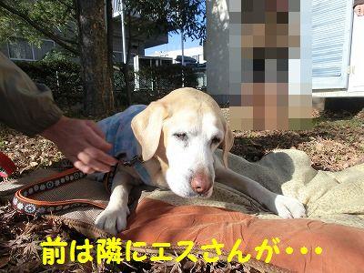 エスちゃんに会いに・・・_e0222588_19334117.jpg