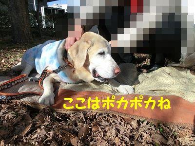 エスちゃんに会いに・・・_e0222588_19335424.jpg