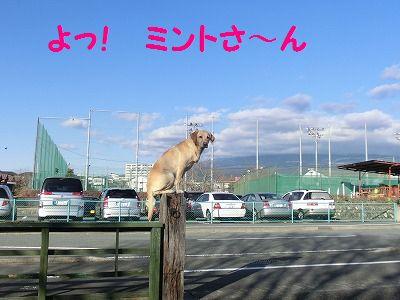 エスちゃんに会いに・・・_e0222588_19381114.jpg