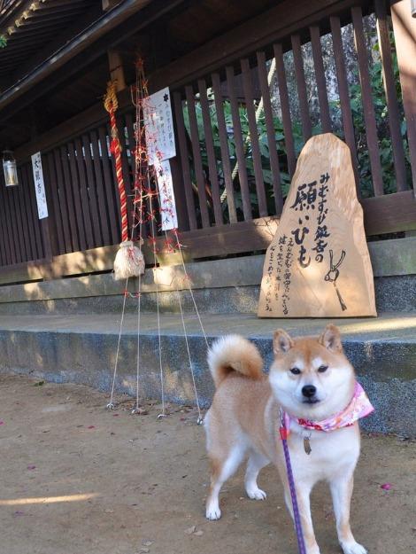 かぼすちゃんの初詣_a0126590_22373317.jpg