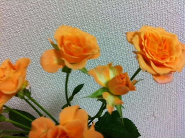 e0077011_0114085.jpg