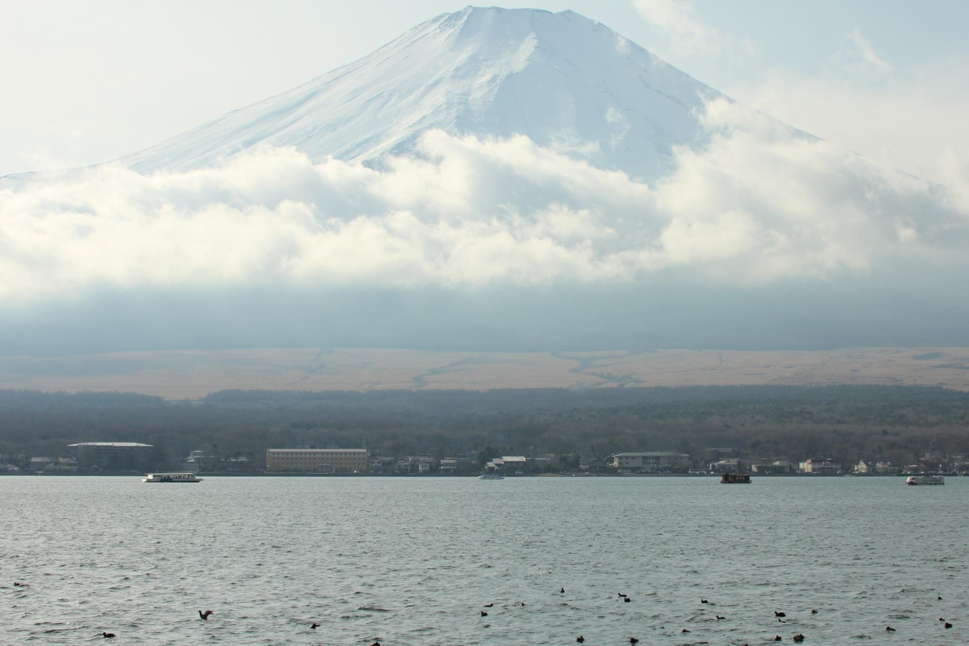 2013.1.5 山中湖・ヒレンジャク、カワアイサ_c0269342_2372081.jpg