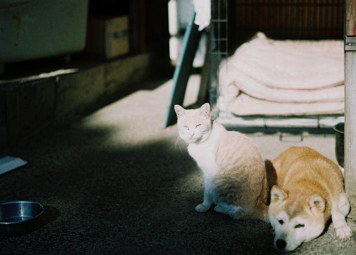 cat and dog_b0170947_2148836.jpg