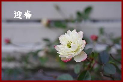 初春_c0207890_18492786.jpg