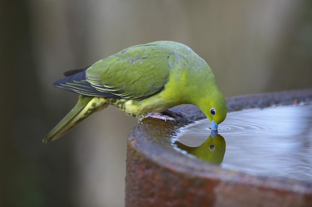 水場の鳥Ⅱ_e0268015_15194458.jpg