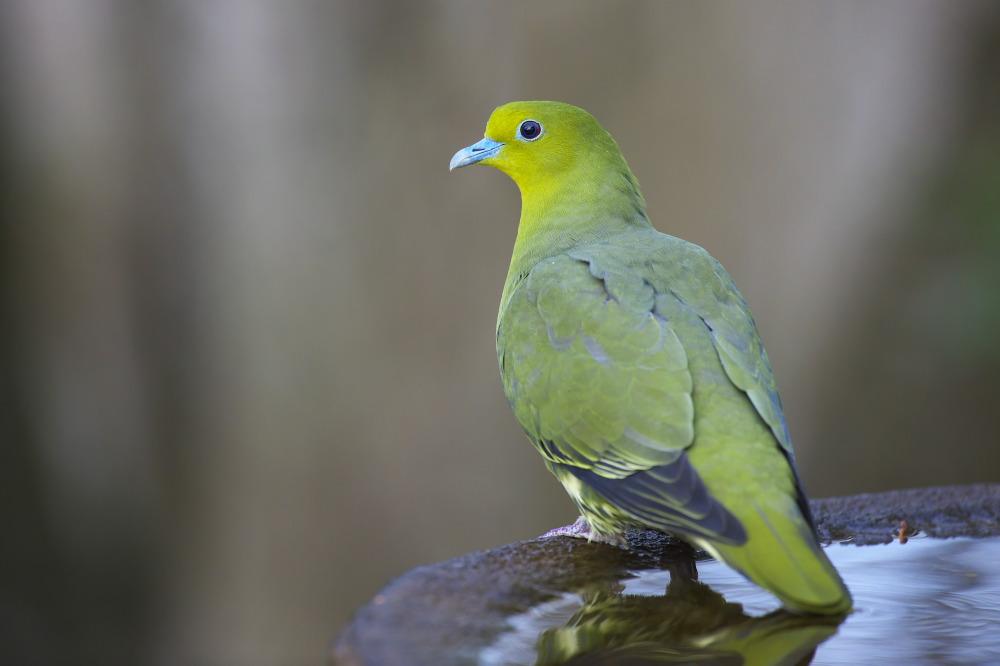 水場の鳥Ⅱ_e0268015_15195583.jpg