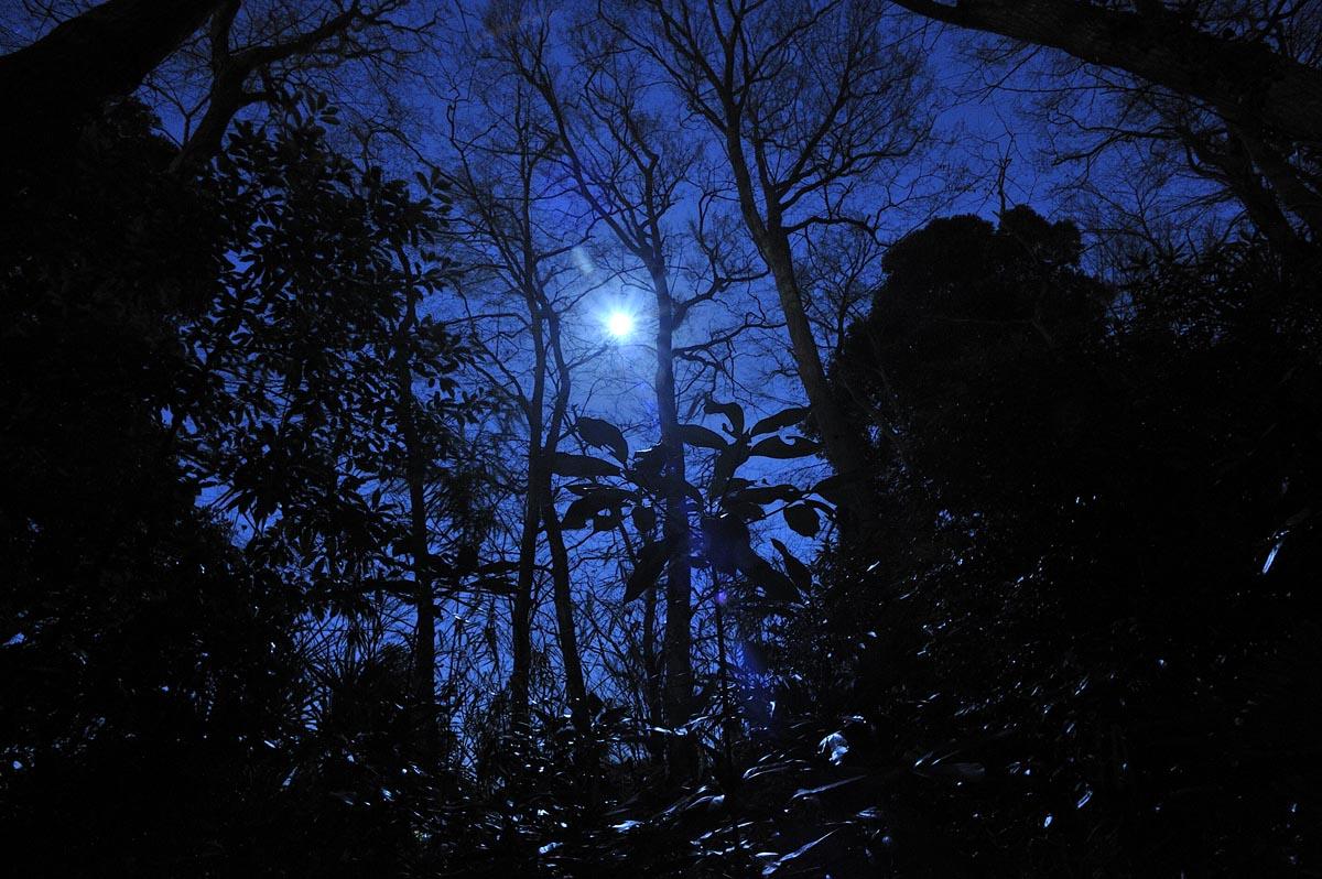 Moon Light Forest_a0059621_1819545.jpg