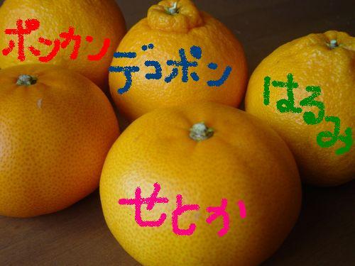2月からの 柑橘_e0081959_21162999.jpg