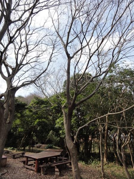 うみべの森一人作業始め  by  (TATE-misaki)_c0108460_1550832.jpg