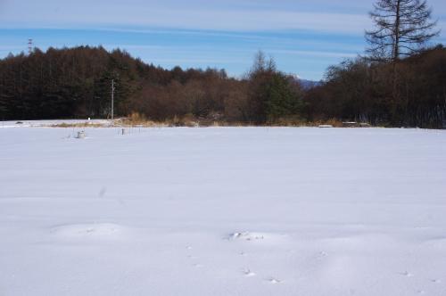 冬の畑_c0110869_2122473.jpg