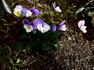 暮らしと庭と_a0233896_15434060.jpg