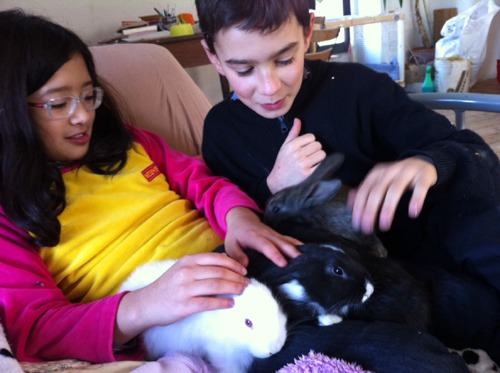ウサギとユキちゃん_f0106597_16261150.jpg