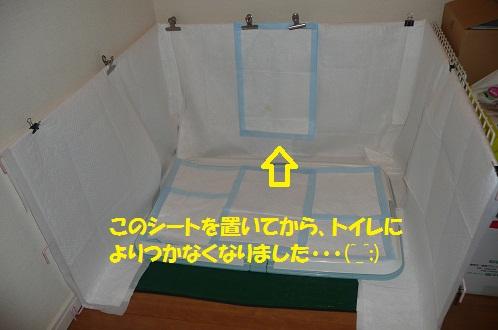 f0121712_7154335.jpg