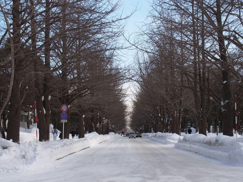 寒波、大雪、雪まつり、節電_c0025115_18341541.jpg