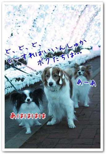 d0013149_1155995.jpg