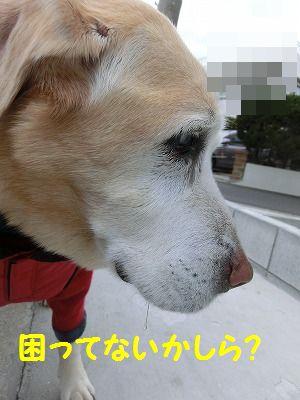 落し物拾ったヨ_e0222588_17313533.jpg