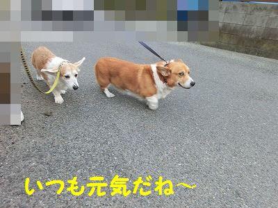落し物拾ったヨ_e0222588_17321252.jpg