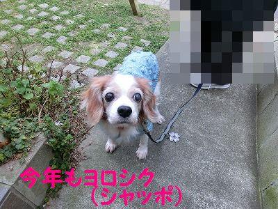 落し物拾ったヨ_e0222588_17322188.jpg