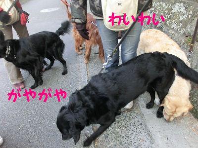 落し物拾ったヨ_e0222588_173462.jpg