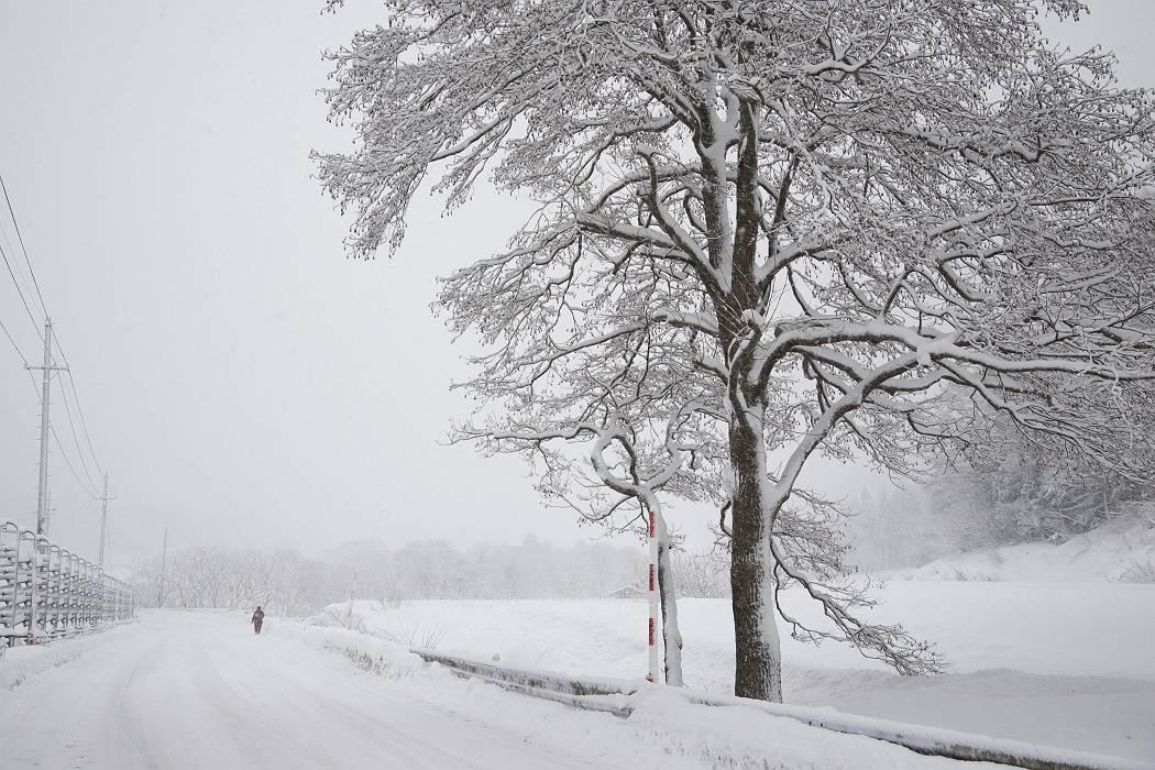 雪国_b0074098_8532018.jpg