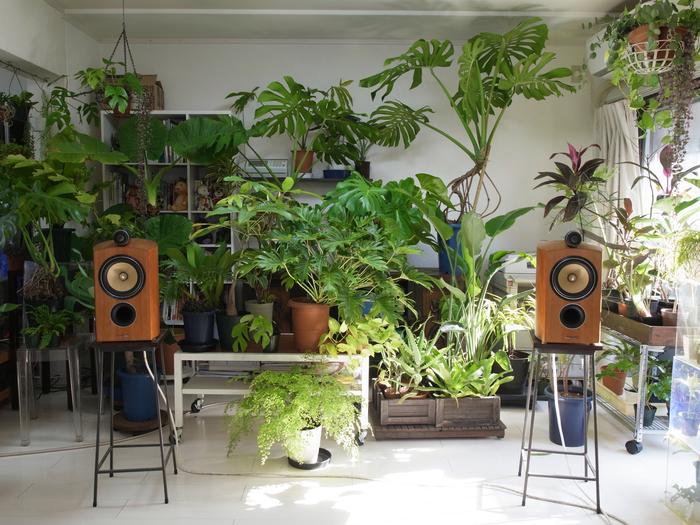 B&W 805Dと観葉植物の午前中_e0276411_19302572.jpg