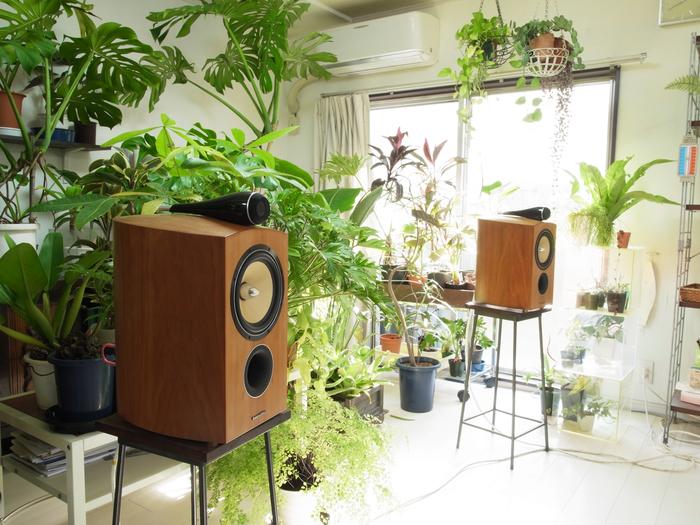 B&W 805Dと観葉植物の午前中_e0276411_19304541.jpg