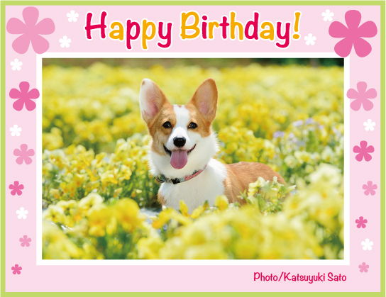 ケディちゃん、ムサシくん、こたろうくん、れいちゃん、もかちゃん、お誕生日おめでとう!_d0102523_23483595.jpg
