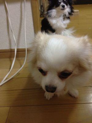 同郷_e0196962_23251598.jpg
