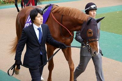2012年度JRA賞発表、年度代表馬はジェンティルドンナ_b0015386_2371598.jpg