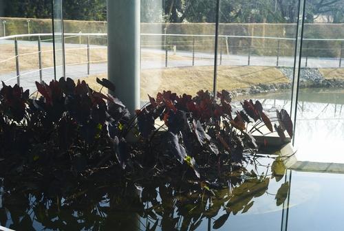 植物園の写真について_b0212922_16101730.jpg