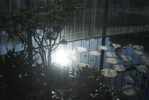 植物園の写真について_b0212922_16131099.jpg