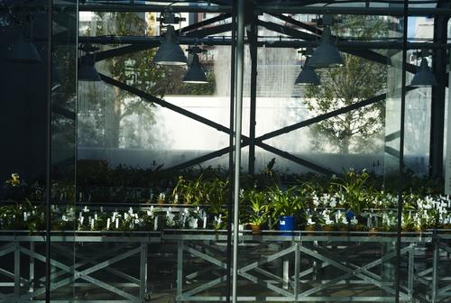 植物園の写真について_b0212922_1664222.jpg