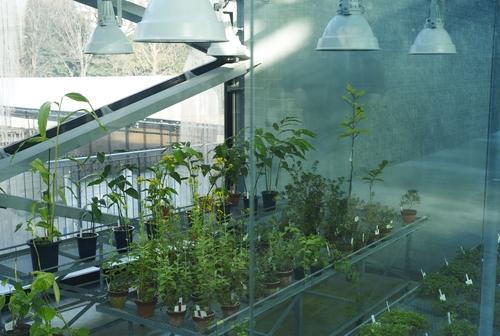 植物園の写真について_b0212922_1671395.jpg