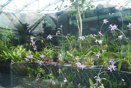 植物園の写真について_b0212922_1672734.jpg