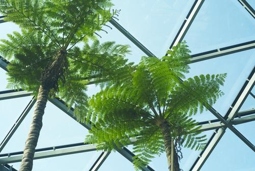 植物園の写真について_b0212922_1693426.jpg