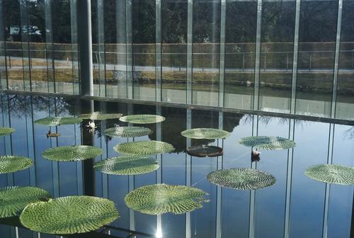 植物園の写真について_b0212922_169563.jpg
